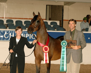 A Spitfire Bey B  Region 9 Reserve Champion AOTH